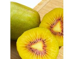 四川蒲江精品红心猕猴桃 12个装 单果约70-90g 新鲜水果