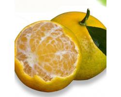 广西皇帝柑 净重5斤 单果55-60mm 沃柑橘 蜜桔橘子桔子 新鲜水果 严选中大果 精选25-28粒