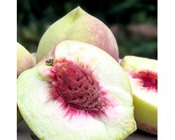 山东青州蜜桃秋桃5斤 当季时令水果桃子毛桃脆甜鲜桃 精品大果